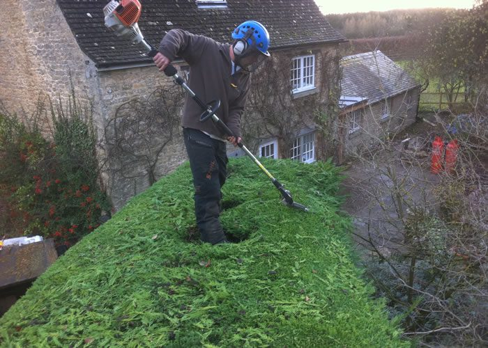 Hedge trimming in Oxford