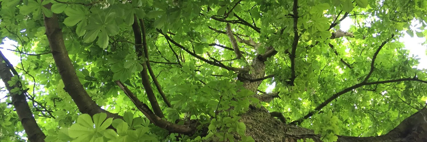 Tree services in Oxford