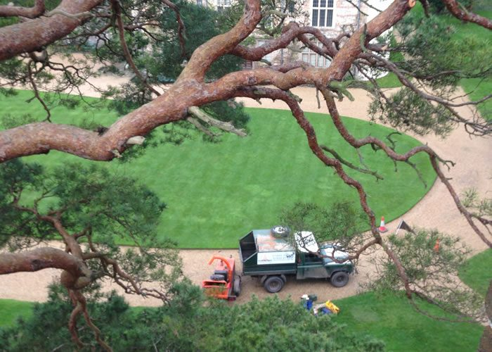 Tree crown lifting in Oxford