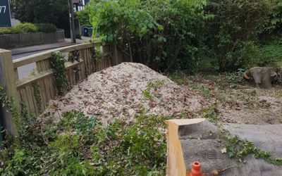 Beech Tree and Stump Removal in Summertown, Oxford