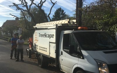 Tree Pruning For Sunningwell Parish Council