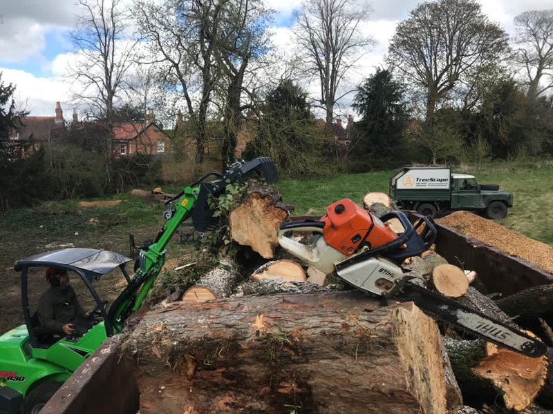 stump grinding of ash tree in oxford