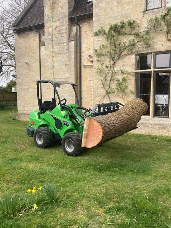 dead ash tree removed Oxford